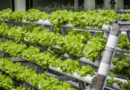 Novagant Corp. Completes Purchase of Two Significant Patents for its Commercial and Residential Hydroponic and Aquaponic Operations